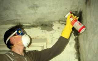 Антисептик против плесени и грибка на стенах