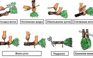Как заготавливать веники для бани – как вязать, сушать и хранить: советы и отзывы