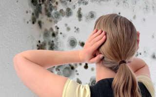 Как избавиться от грибка и плесени на стенах жилища